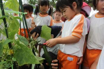 夏野菜の収穫を行いました!