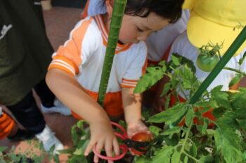 野菜の収穫を行いました!